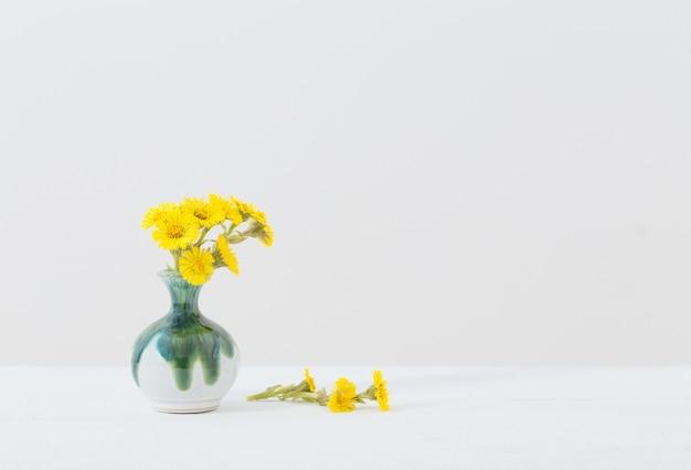 Fiori di farfara in vaso di ceramica su bianco