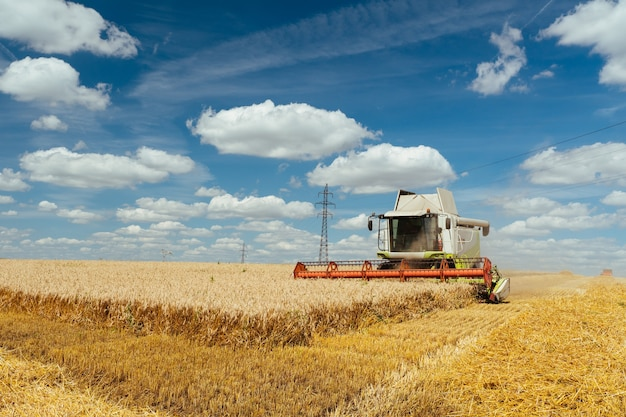 La mietitrebbia raccoglie il grano maturo. orecchie mature del campo d'oro sullo sfondo del cielo arancione nuvoloso tramonto. . concetto di un ricco raccolto. immagine dell'agricoltura