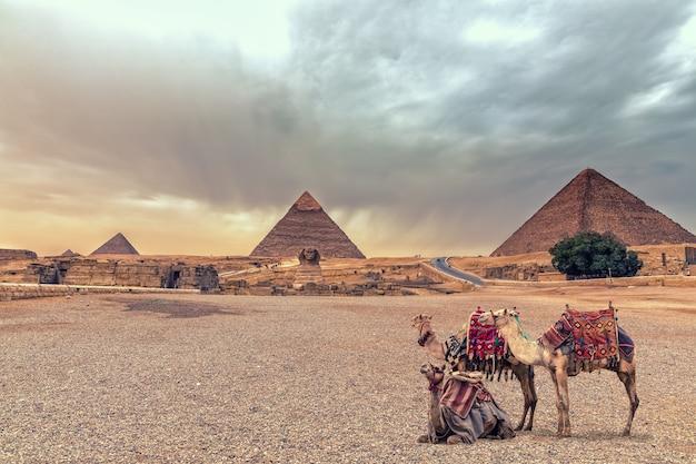 Complesso delle piramidi di giza e della sfinge nel deserto con i cammelli, egitto.