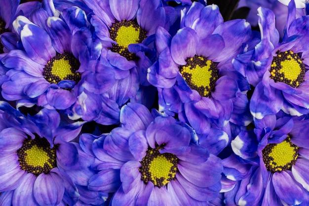 Composizione di bellissimi fiori sullo sfondo