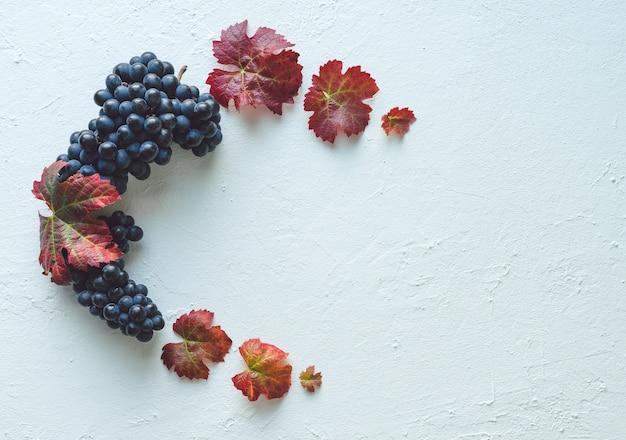 Composizione di grappoli di uva nera matura e foglie di vite su uno sfondo dipinto di bianco.