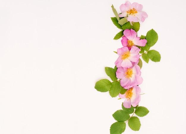 Composizione con fiori rosa canina. vista dall'alto, copia spazio