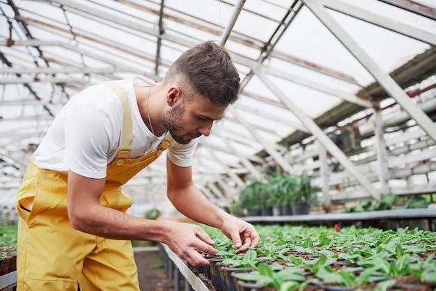 Concentrarsi sul lavoro. coltivatore barbuto maschio attraente che si prende cura dei fiori nella serra.