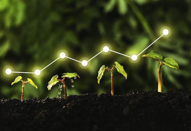 Concetto di crescita aziendale, profitto, sviluppo e successo. la piantina sta crescendo dal terreno fertile.