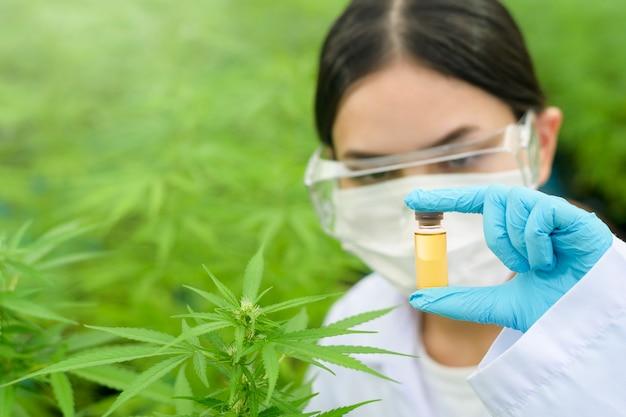 Concetto di piantagione di cannabis per uso medico