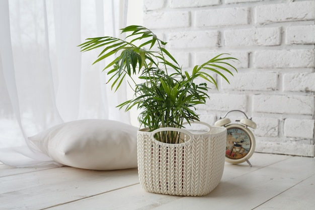 Concetto di corteggiamento di piante domestiche