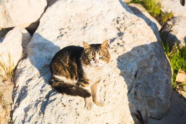 Concetto di animali senzatetto - gatto randagio per strada.