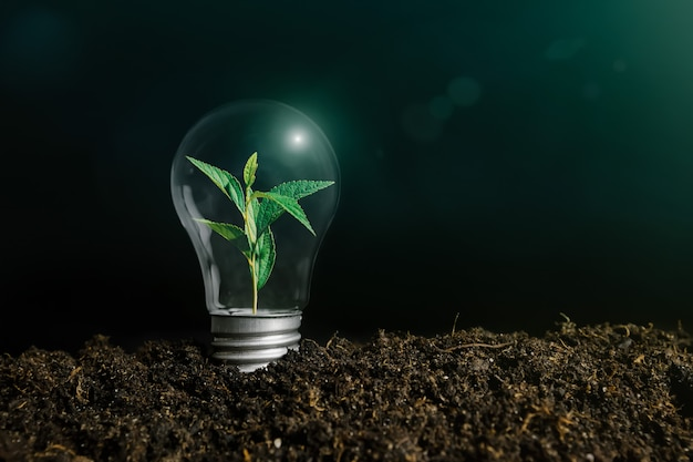 Immagine di concetto di una lampadina a terra con una pianta all'interno