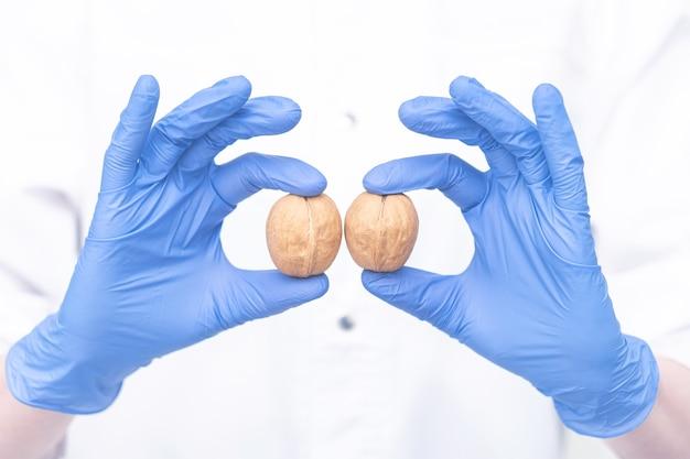 Concetto di testicoli maschili il medico dimostra il simbolo della salute maschile