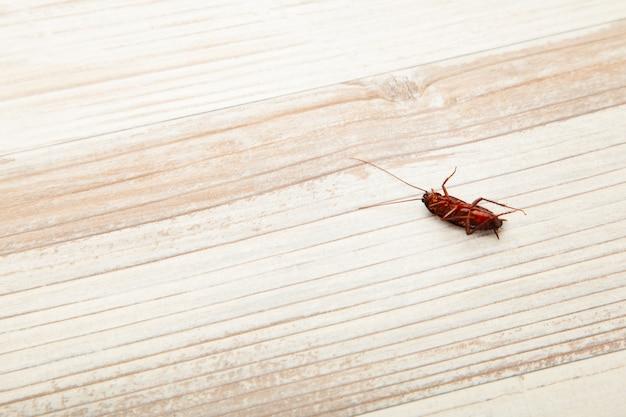 Concetti il problema in casa a causa degli scarafaggi che vivono in cucina