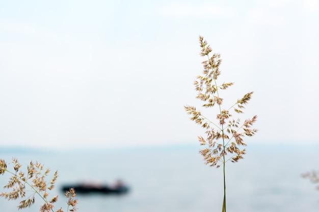Concetto per una vacanza rilassante al mare. spiga d'erba sullo sfondo di un uomo che galleggia su un materasso in mare
