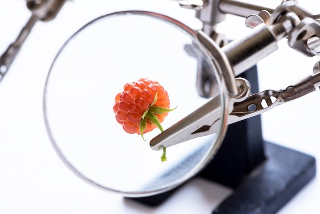 Concetto di ricerca o controllo della ricerca genetica dell'industria agroalimentare berry vista attraverso una lente d'ingrandimento primo piano