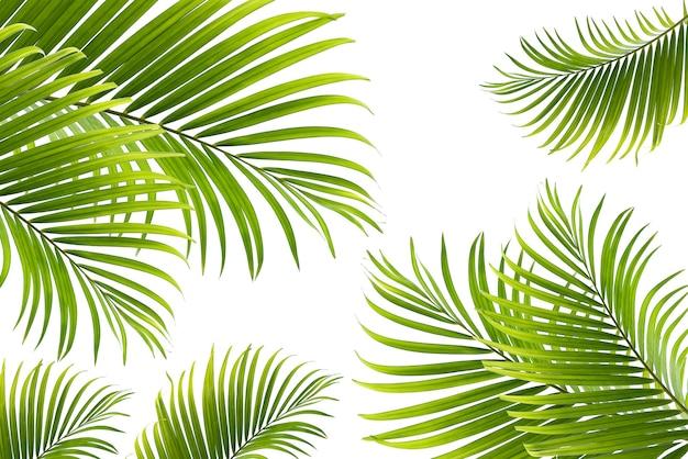 La trama di concetto lascia il fondo verde astratto della natura tropicale lascia la noce di cocco isolata su white