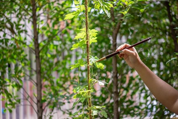 Concettuale del disegno e della pittura dal pennello asiatico ravvicinato alla natura in campo all'aperto.