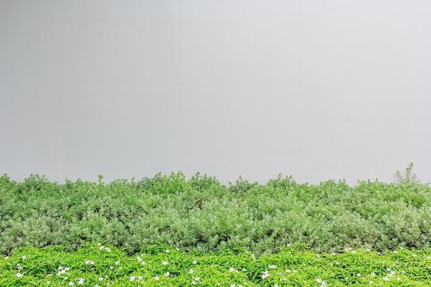 Muro di cemento o muro di marmo con piante ornamentali o albero giardino per conoscenze acquisite.