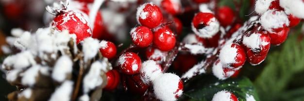Coni abete e ramoscello di sorbo nella neve per la decorazione domestica