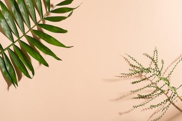 Cornice angolo di congratulazione da ramoscelli verdi di foglie tropicali esotiche su beige pastello.