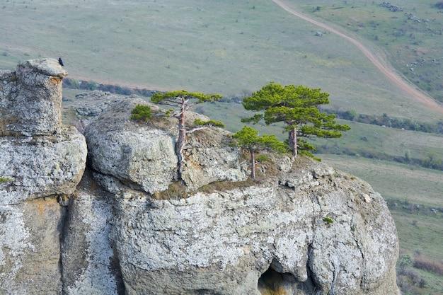 Alberi di conifere sulle rocce in alto sulla valle nebbiosa sfondo (monte demerdzhi, crimea, ucraina )