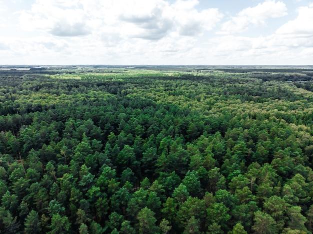 Foresta di conifere in estate fotografata aerea da drone
