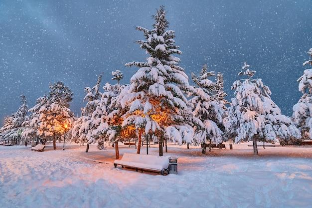 Conifere, lanterne e panca in legno ricoperta di neve