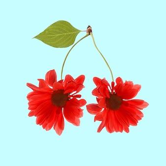 Collage di arte contemporanea. marguerite di due fiori rossi come ciliegia su fondo blu. collage di arte concettuale e colorato creativo. design moderno