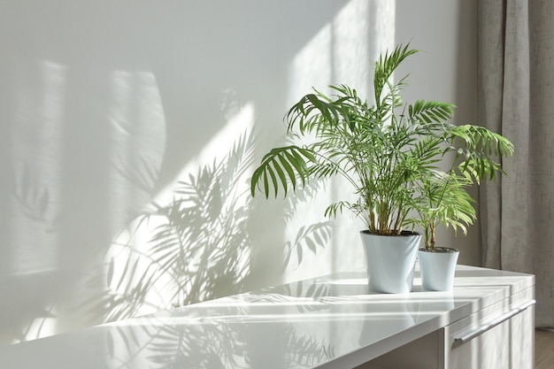 Angolo interno eco contemporaneo con superficie lucida della scrivania, pianta d'appartamento verde naturale nei vasi di fiori e lunghe ombre dalla finestra su un muro durante la giornata di sole, copia spazio. posto di lavoro ecologico.