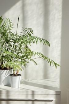 Posto interno eco contemporaneo con tavolo elegante e pianta d'appartamento verde naturale nei vasi di fiori contro la parete chiara con ombre dalla finestra in una giornata di sole, copia spazio. posto di lavoro ecologico.