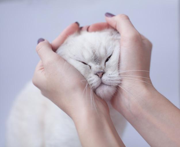 Gatto contenuto con gli occhi chiusi essendo animale domestico dalla mano umana