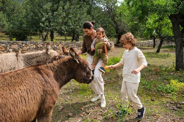 Contenta madre e bambini che allattano adorabili asini domestici in campagna