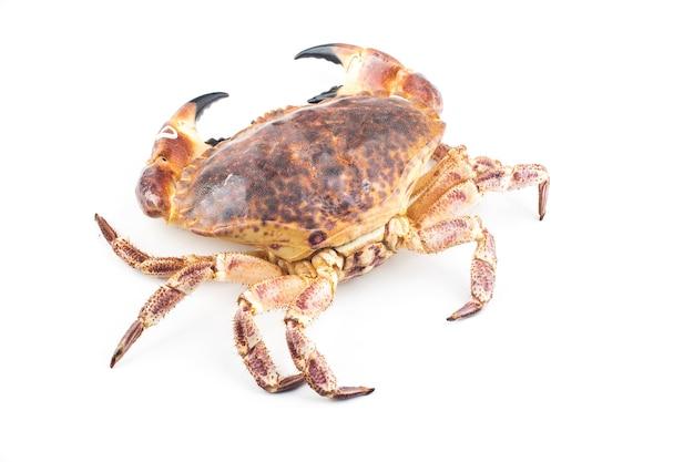 Granchio marrone cucinato o granchio commestibile isolato sui precedenti bianchi.