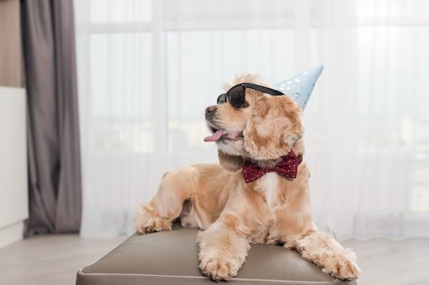 Bel cane vestito con la lingua fuori