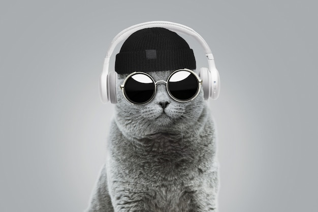 Un simpatico gatto hipster con cappello alla moda e occhiali da sole rotondi vintage ascolta musica in cuffie wireless bianche su sfondo grigio. concetto di idea creativa. stile animale