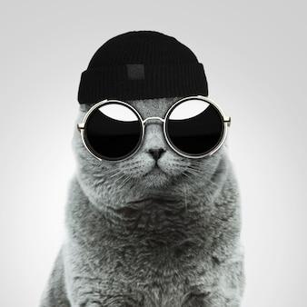 Gatto hipster britannico alla moda alla moda con occhiali da sole rotondi vintage alla moda e un cappello nero in studio su uno sfondo grigio. idea creativa e moda