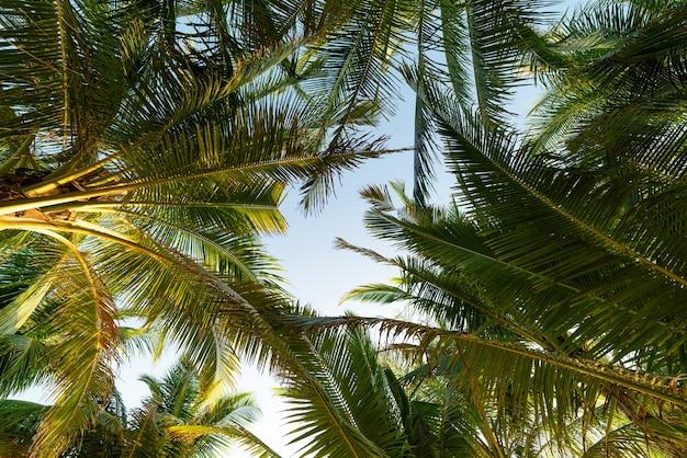 Copia spazio di tropicale foglia di palma da cocco con la luce del sole al tramonto o all'alba cielo e nuvola sfondo astratto vacanze estive e concetto di avventura di viaggio nella natura sfondo di natura stupefacente.