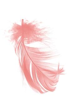 Piuma rosa corallo su fondo bianco