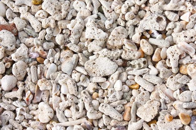 Struttura della spiaggia di corallo e conchiglia per sfondo estivo