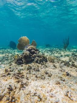 Corallo sott'acqua con acqua blu