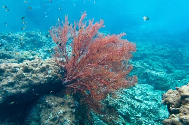 Alghe e corel di coraline nell'isola del cockburn, myanmar