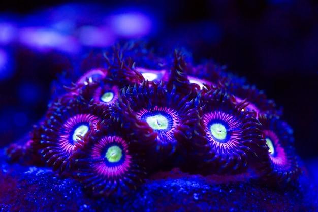 Coralli in un acquario marino.
