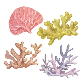 Coralli mare viaggio spiaggia illustrazione ad acquerello disegnato a mano stampa tessile vintage retrò oceano