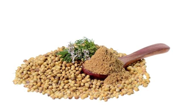 Semi di coriandolo, coriandolo fresco e coriandolo in polvere isolato su priorità bassa bianca.