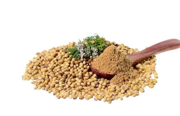 Semi di coriandolo, coriandolo fresco e coriandolo in polvere isolato su superficie bianca.