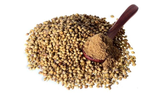 Semi di coriandolo, coriandolo fresco e coriandolo in polvere isolati.