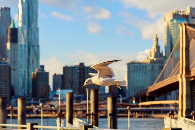 Cormorani che volano sullo sfondo del ponte di brooklyn più