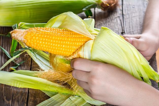 Pannocchie di mais in mano
