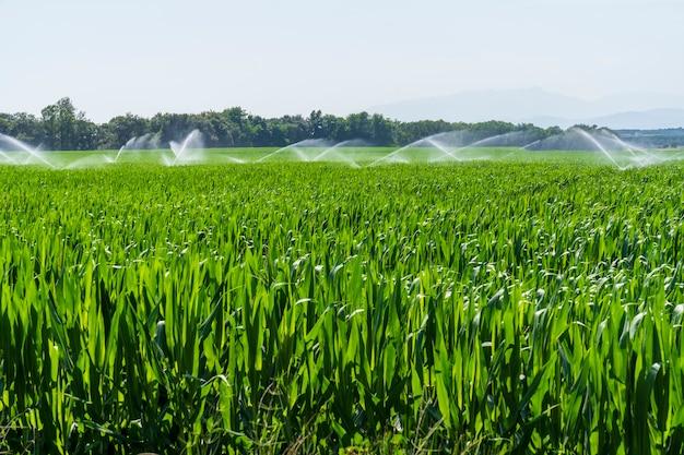 Campi di mais nella pista ciclabile di llagostera essendo irrigati.