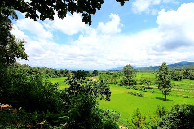 Vista del paesaggio montano foresta di mais