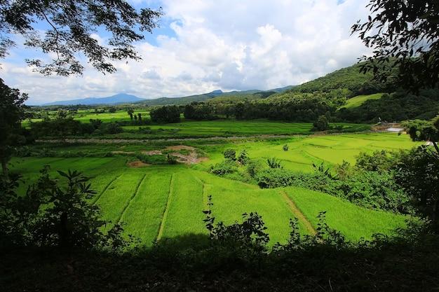 Vista panoramica della foresta del campo di mais