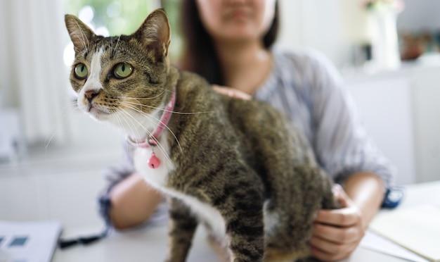 Coronavirus. donna d'affari che lavora da casa con il gatto concetto prevenzione quarantena domestica covid-19 situazione di focolaio di coronavirus
