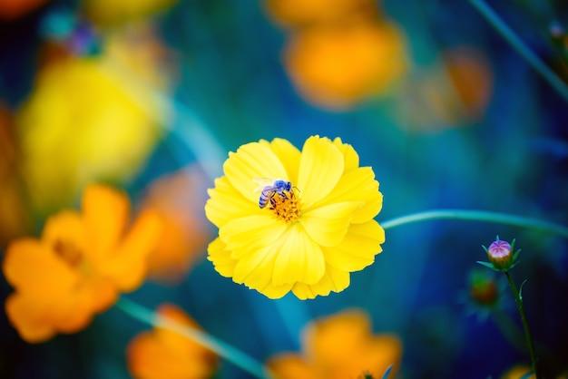 Fiori dell'universo con le api che volano nella calda luce del tramonto